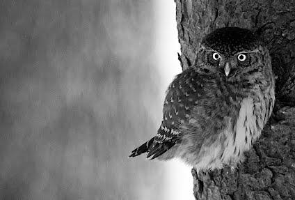 Taustakuva Varpuspöllön kevät