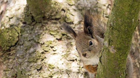 Huhtikuu 2013, orava